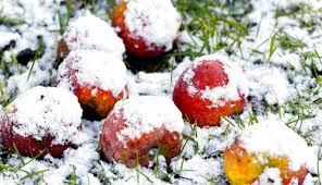 æbler med sne